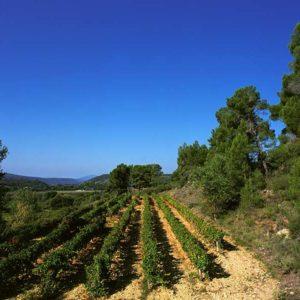 AOC Côtes de Provence